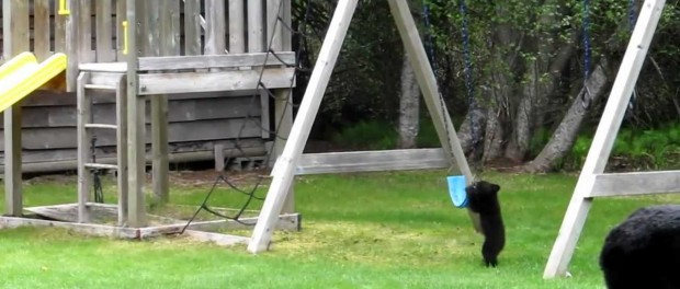 Медведица с детенышами повеселились на детской площадке