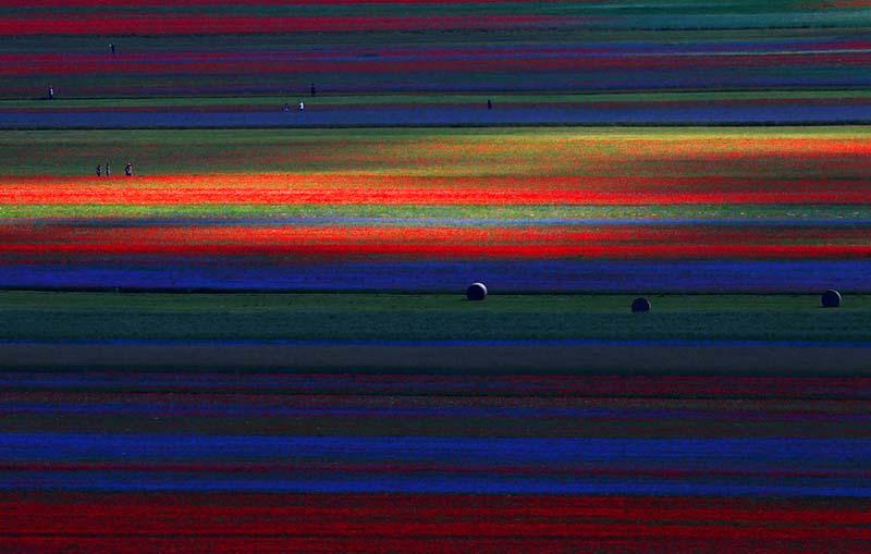 Цветочный градиент на итальянских полях