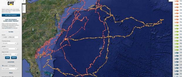 Океанологи представили онлайн-карту популяции морских животных