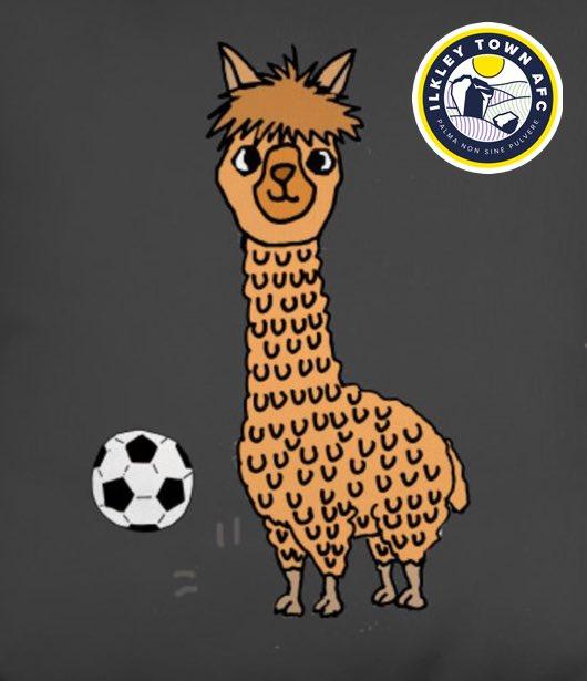 alpaca frenzy here @ilkleytown