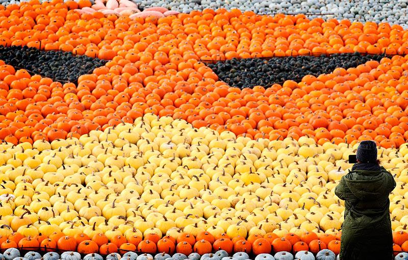 Инсталляция из тыкв и кабачков в преддверии Хэллоуина