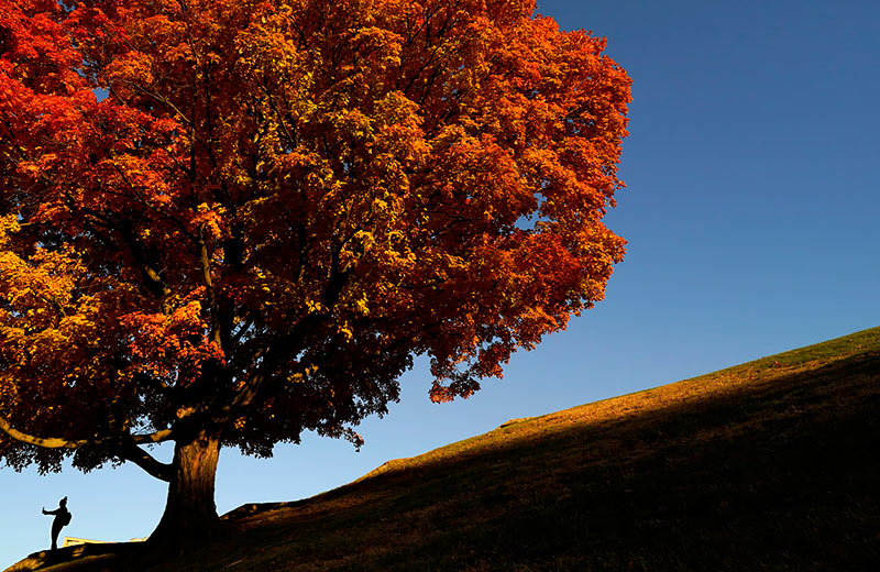 Золотая осень. Приятна мне твоя прощальная краса — Люблю я пышное природы увяданье, В багрец и в золото одетые леса,