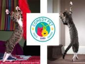 Comedy-Pet-Photo-Awards