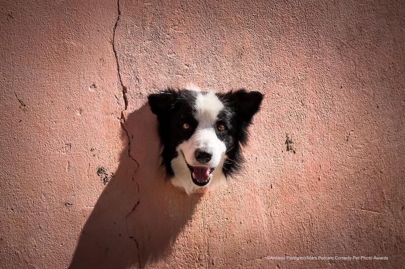 """Живой трофей"" / Mars Petcare Comedy Pet Photo Awards 2020"