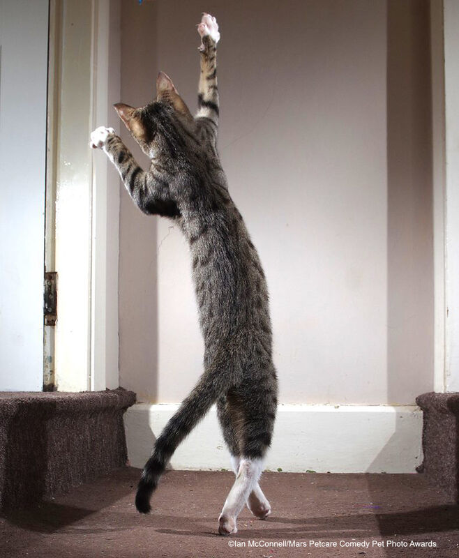 """""""Танцующий кот"""". Iain McConnell with their picture The Dancing Cat"""