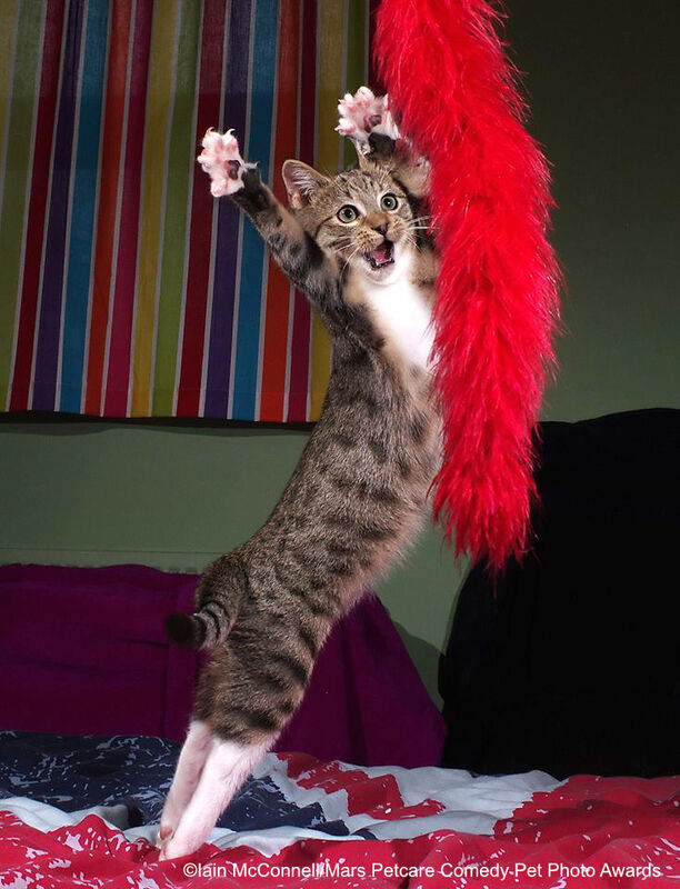 """""""Танцующий котенок"""". Iain McConnell with their picture The Dancing Kitten"""