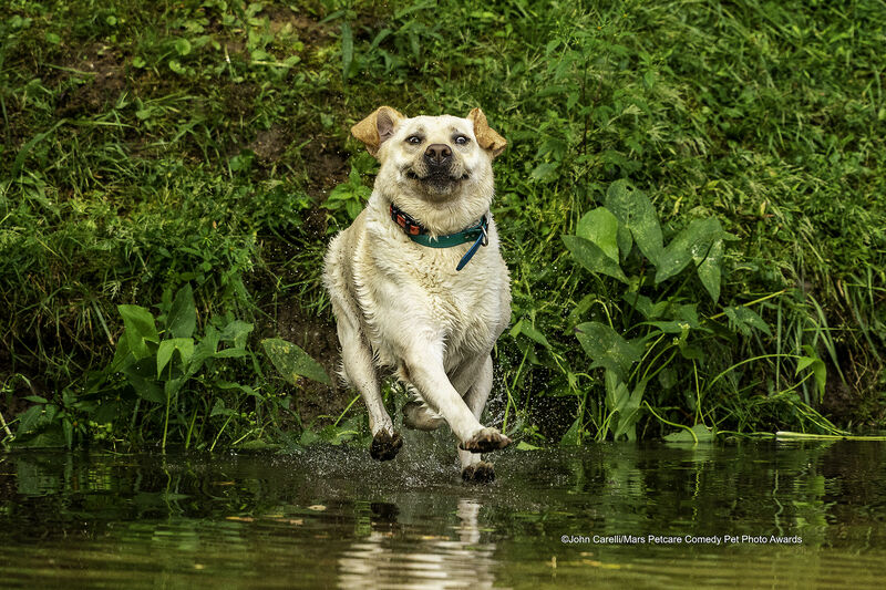 """Смотри, мама, я могу ходить по воде!"" Look Mom--I Can Walk on Water"