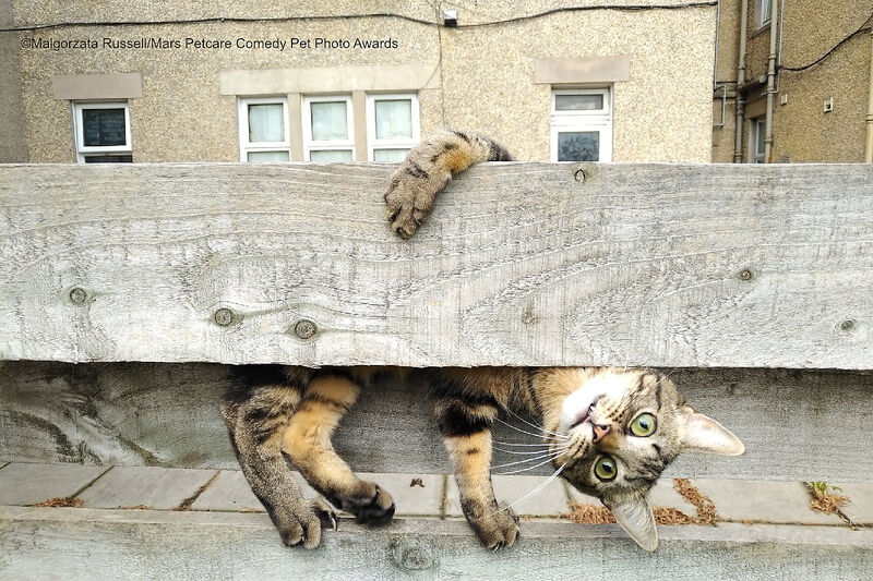 """""""Почему ты вверх ногами?"""" Cat Category - Our Fabulous Feline Friends"""
