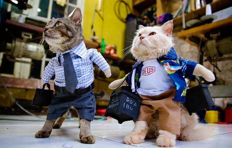 Кошачья мода в Индонезии