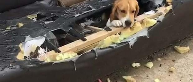 Забавное видео собак, которые удивили нас
