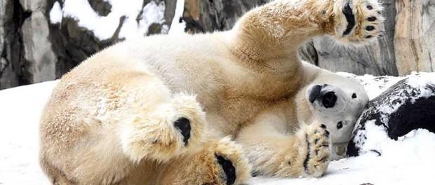 Забавные зимние видео из зоопарков мира