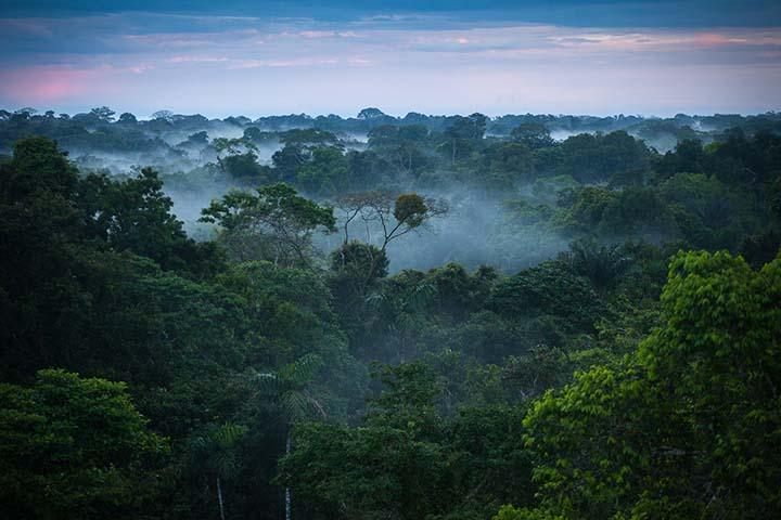 Леса которых вскоре можно будет не увидеть