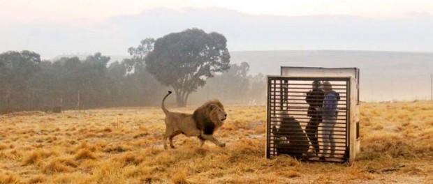 В Африке сделали зоопарк наоборот