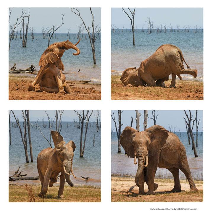 Finalists Wildlife Photography Awards 2021