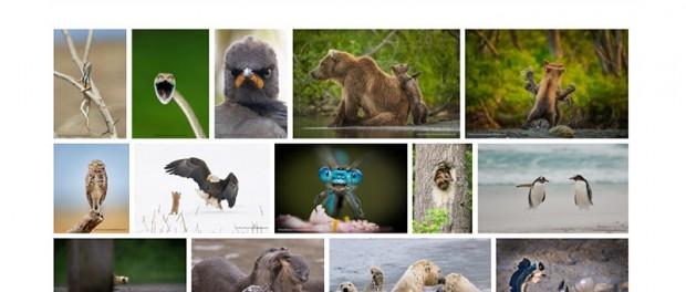 Объявлены финалисты самых веселых фото из мира животных