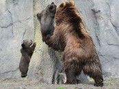медведица-и-медвежата