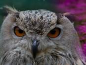 Интересные птицы мира