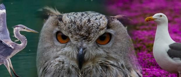 ТОП-10 самых ярких и красивых птиц
