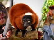 Удивительные и необычные животные