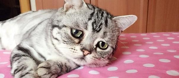 Двойник кота в сапогах покоряет Instagram