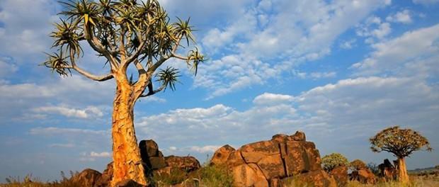 Удивительные деревья мира, о которых мы ничего не знали