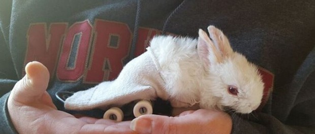 Позитивный кролик-инвалид покоряет интернет