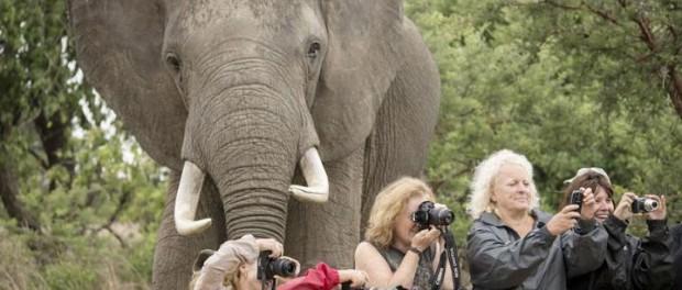 Животные, которые превратили обычные фото в шедевры юмора