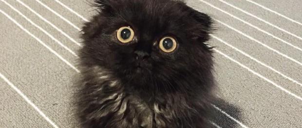 Кот с глазами, которые покоряют душу