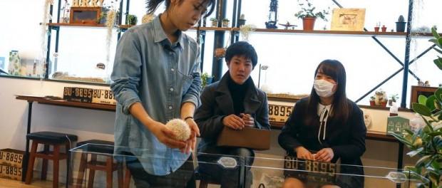 Японцам уже мало кошек для общения и они открывают кафе с ежиками