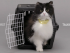 catterbox1