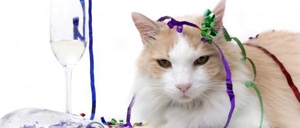 Теперь уже и коты могут стать собутыльниками