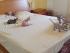 Sphynx cat in bed