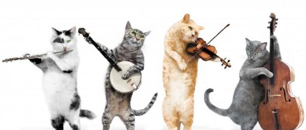 Забавное видео про кошачьего любителя классической музыки