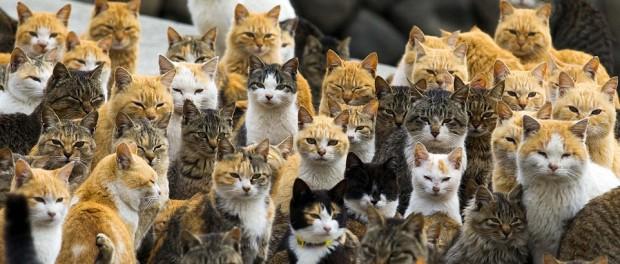 Дольше всех домашние кошки и собаки живут в Японии