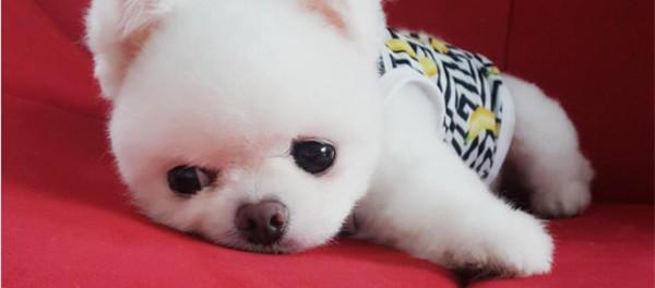 Мимишная битва собак и котов из Азии