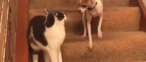 Кот научил пса гиперскоростному бегу
