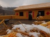 ферма из кукурузы