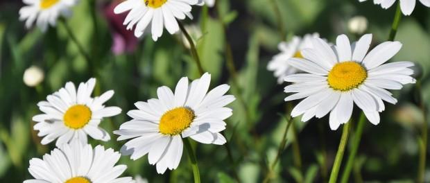 ТОП-10 самых ярких и красивых цветов