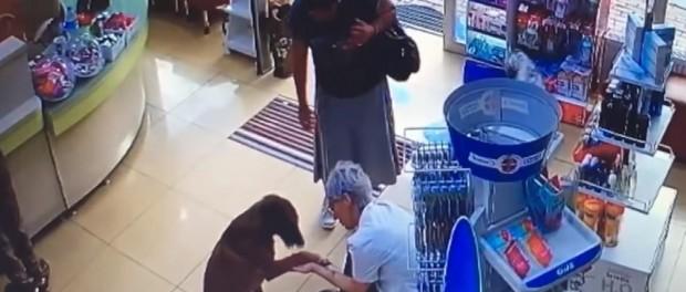 В Турции собаки приходят в аптеку за лекарствами