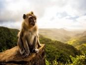 Eco-Conscious Monkey