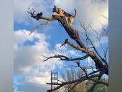 dog-in-tree1