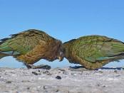 arrots that understand probabilities2