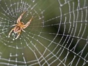 Spiders-Think-Web