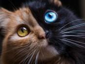 quimera-cat222