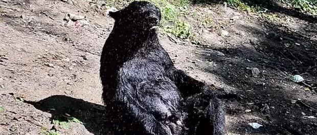 Забавное видео приема медведем душа покорило сеть