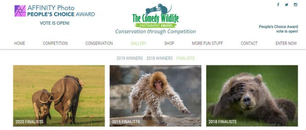 В конкурсе Comedy Wildlife Photo Awards определились финалисты