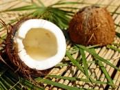 на Бали разрешили платить за учебу кокосами