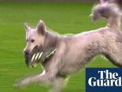 dog disrupts match