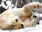 Brookfield Zoo snow