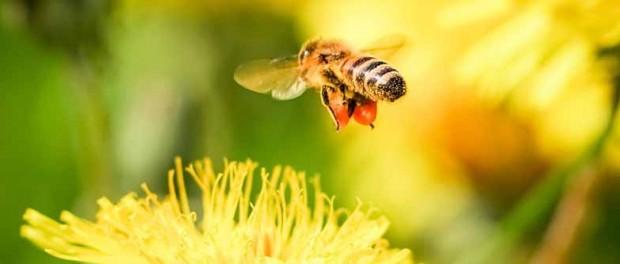 Австрийцы обвинили пчел в контрабанде